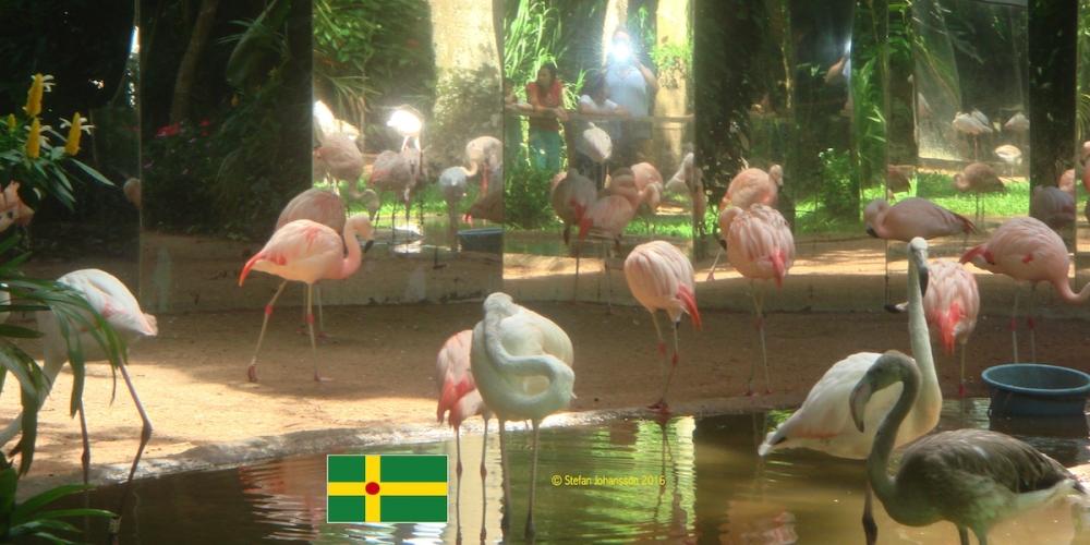 Flamingos+